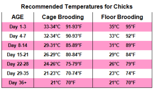 Poultry Chicks Brooding Temperature Chart