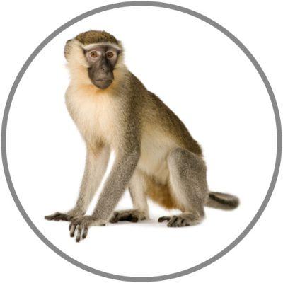 Non-Human Primate